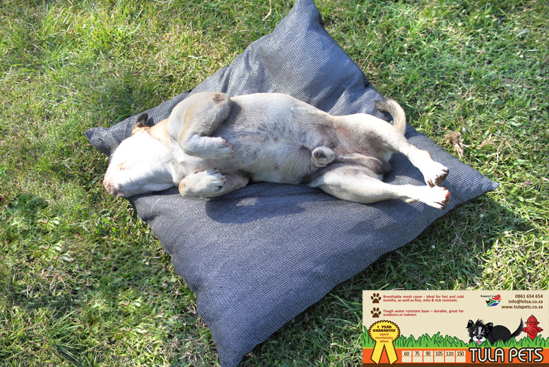 Make your pet a happy pet - Order your Tula Pet Bed Now